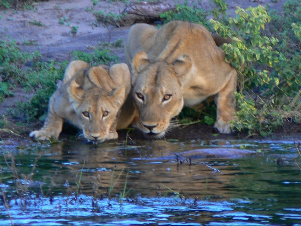 DLX South African Safari - JANUARY